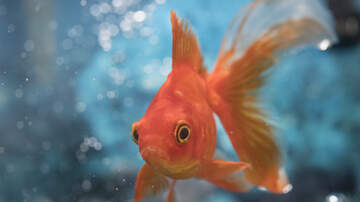 Mary the Web Girl - Should People Be Arrested for Neglecting Pet Fish?