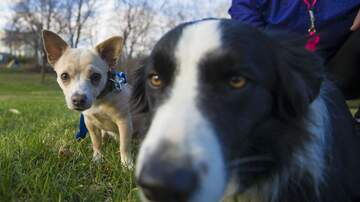 Tammy Daye - VIDEO: Border Collie Bolts To Save Another Dog From Getting Run Over By Car