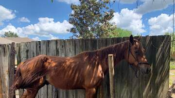 Tampa Local News - Riverview Man Charged With Neglect After Horses Abandoned, One Died