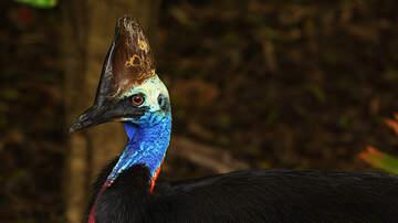Weird News - Florida Man Killed By His Rare Pet Bird