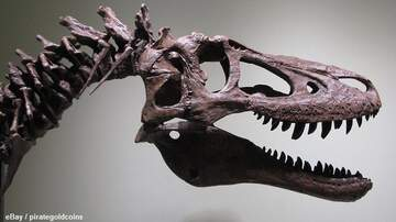 Coast to Coast AM with George Noory - Paleontologists Decry Baby Tyrannosaurus Rex eBay Auction
