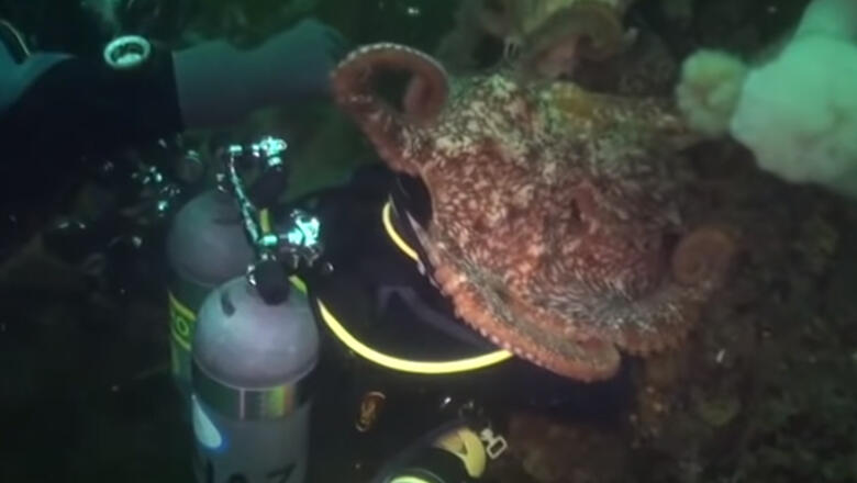 Wild Underwater Video Shows Giant Octopus Engulfing Diver's Head