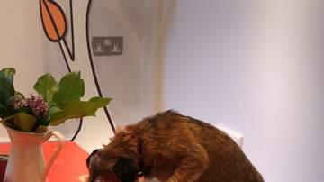 Chris Marino - A New York City Restaurant Is Now Serving Up A Dog Menu