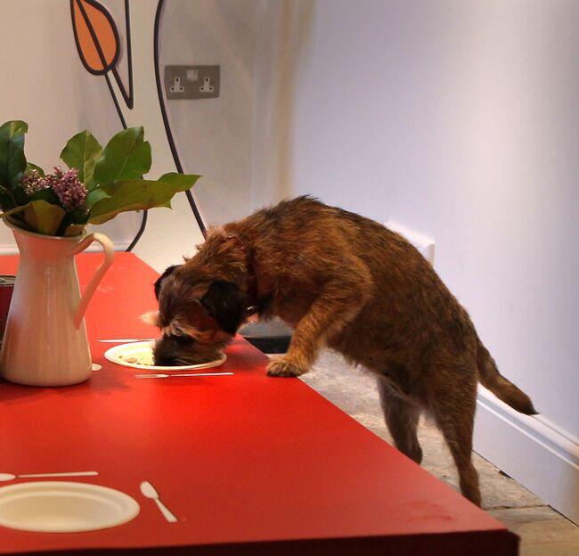 Lily's Kitchen Launch The First Pop-Up Doggy Diner