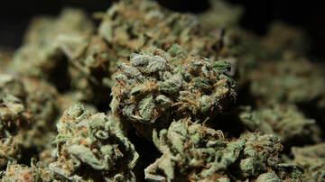 Tampa Local News - Florida Congressman's Bill Backs Veterans' Access to Medical Marijuana