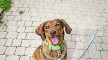 EB's Babes - Meet QUEEN, a 10 month old hound in need of a home