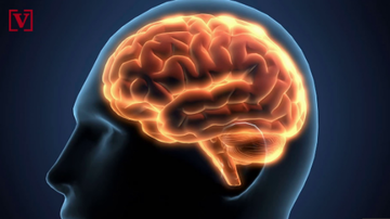 Qui West - Study Says The Brain Will Keep Working After The Heart Stops!