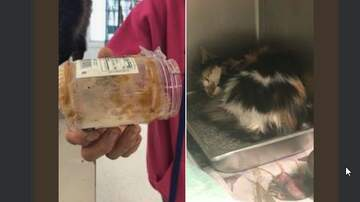 None - What do you do when you find a cat with its head stuck in a jar?