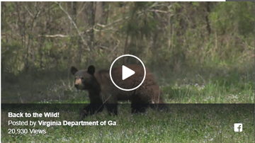 Steve - Springtime: Keep an eye out for wildlife...And cubs released into the wild