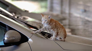 Bill Handel - Man Blames His Car Crash On A Cat....The Police Say It Was Alcohol