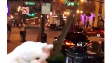 Call me Furious...... Mr. Furious! - Easter Bunny Hops Up to Help Subdue Bad Guy