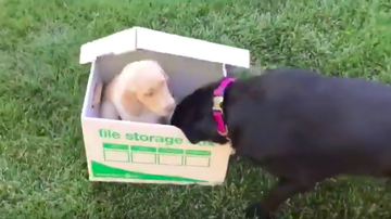 JB - Dog Surprised With New Puppy