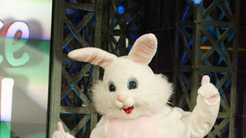 Temple - Easter Bunny To The Rescue!