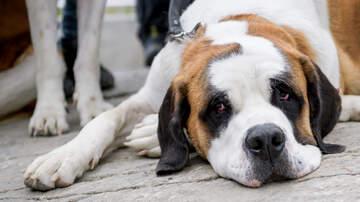Nikki Dulaney - Lost Dog Awareness Day!