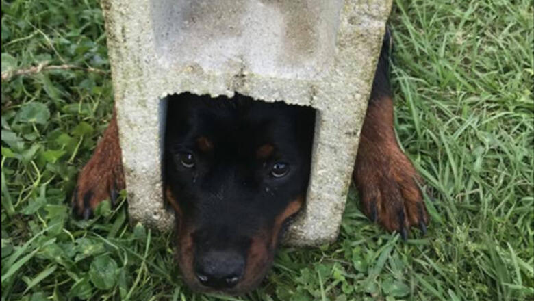 Firefighters Use Jaws Of Life To Rescue Florida Dog Trapped In Cinder Block