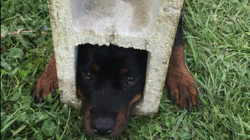 National News - Firefighters Use Jaws Of Life To Rescue Florida Dog Trapped In Cinder Block