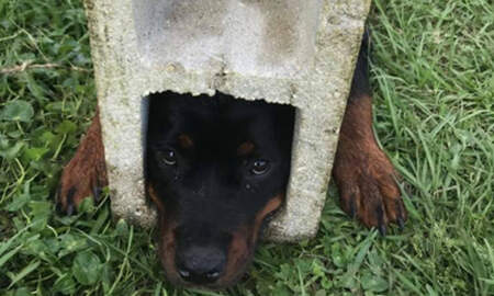 Weird News - Firefighters Use Jaws Of Life To Rescue Florida Dog Trapped In Cinder Block
