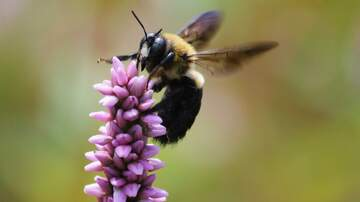The Wicked Cool Morning Show - Happy Bee Day.... Some of Joe's Beetastic Images