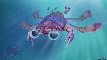 Coast to Coast AM with George Noory - Scientists Unearth Ancient 'Chimera Crab'