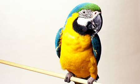 Weird News - Cops Seize Parrot Trained To Be Lookout For Drug Dealers