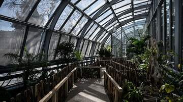 Robin - Nashville Bar is Located Inside a Greenhouse