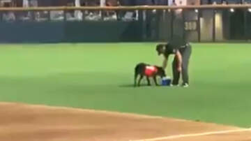 Sports Top Stories - Bat Dog For Las Vegas Baseball Team Brings Umpires Water