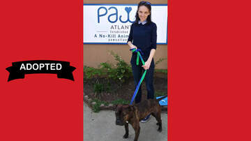 Wags with Wendy - Wags with Wendy - Baki ADOPTED!