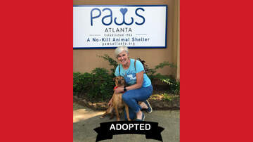 Wags with Wendy - Wags with Wendy - Rose ADOPTED!