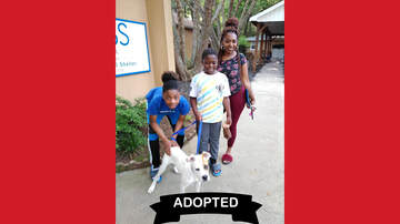 Wags with Wendy - Wags with Wendy - Irwin ADOPTED!