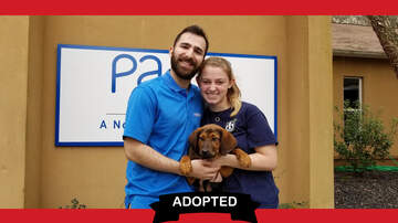 Wags with Wendy - Wags with Wendy - Spicoli and Bueller ADOPTED!