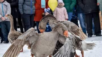 Wide World of Wack with Bird  - Crazy Birds!