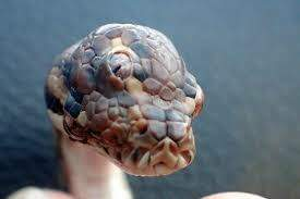 Monsters - HUH!! WANNA SEE A THREE-EYED SNAKE??