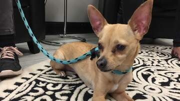 Pet of the Week - Meet Marco, Our Pet Of The Week From Humane Society Of South Mississippi