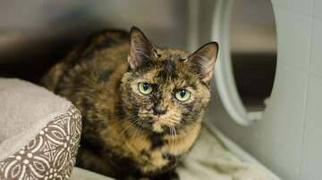 None - LCHS Pet of the Week: Cleo