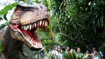 Rick Lovett - Dinosaurs Coming To The Houston Zoo This Month