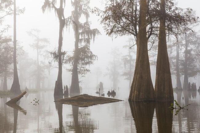 Louisiana bayou in fog