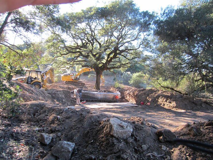 couple ordered to  pay nearly 600,000 for uprooted oak tree