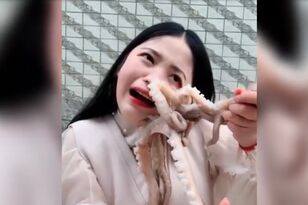 Vlogger Attacked As She Tries To Eat Live Octopus During Live Stream