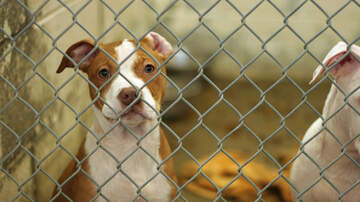 #iHeartPhoenix - Arizona Gov. Doug Ducey Signs New Animal Abuse Bill Into State Law