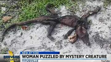 Coast to Coast AM with George Noory - Bizarre Animal Carcass Found in Florida