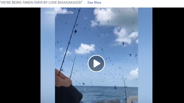 Mix Mornings with Laura Diaz - VIRAL VIDEO: Lovebugs Swarm Boat