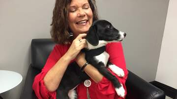 Pet of the Week - Harper is our Pet of the Week from the Humane Society of South Mississippi