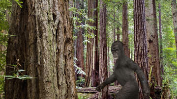 Stranger Zone - Man Arrested For Calling 911 About An Ax-Carrying Sasquatch On Attack