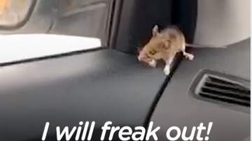 Jake Dill - Guy Freaks Out Because Mouse Gets into His Car