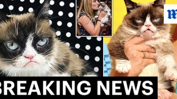 Beth Bradley - Internet sensation Grumpy Cat has died