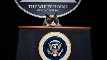 Toby Knapp - #ReadThisFIRST: Today, we live in a world without GRUMPY CAT... #RIP