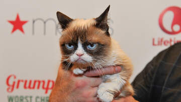Bull Morning Show - Grumpy Cat Has Died At The Age of 7