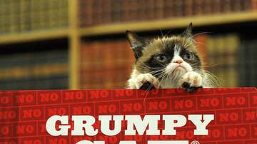 Ric Rush - Grumpy Cat Is Dead!