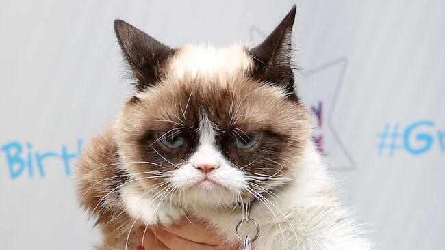 "Grumpy Cat's ""Grumpiest"" Birthday Bash"
