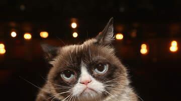Charlie Munson - Social Media Star Grumpy Cat Dies